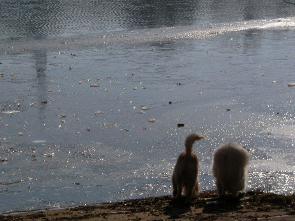 Naturpark Rheinland Hunderunde Köln Sonne Winter Spazierengehen Wandern See Hunde Wasser Trinken