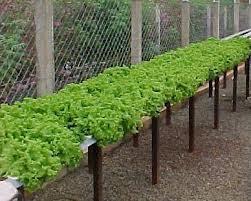 los cultivos hidropnicos o hidropona pueden ser definidos como la tcnica del cultivo de las plantas sin utilizar el suelo usando un medio inerte