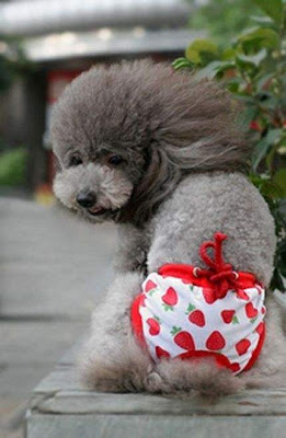 seluar anjing