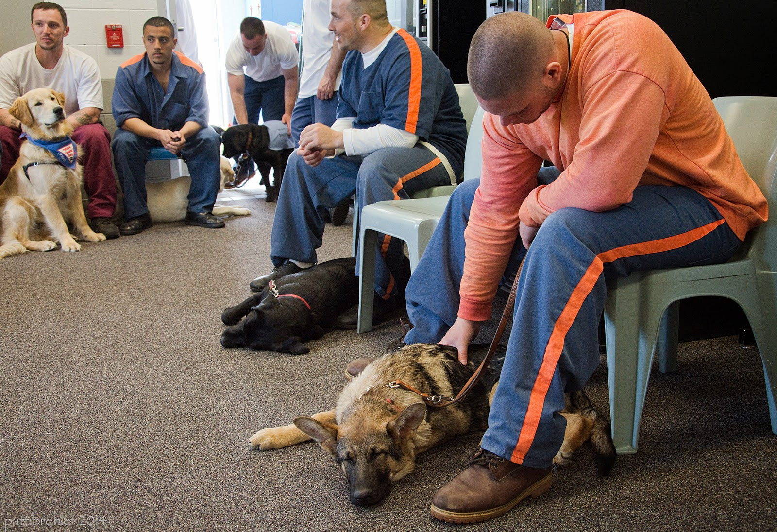There are two men on the left in the background sitting on chairs facing the camera. The man on the far left is wearing a white t-shirt and maroon pants and there is a golden retriever sitting on the carpet between the man's knees. The man next to him is wearing the prison blue uniform and is resting his forearms on his knees with his hands clasped between them. There is a man to the left coming in a door, leaning over a black lab wearing a light blue jacket. This man is wearing a white t-shirt and blue pants. On the right side are two men stting on light blue chairs facing the left. The man closest to the camera on the far right is wearing a light orange shirt and prison blue pants and is leaning over to pet a german shepherd with his right hand. The german shepherd is lying on the carpet under his chair. The next man is wearing the prison blue uniform and has his elbos on his knees. A black lab is lying on its left side under the man's chair.