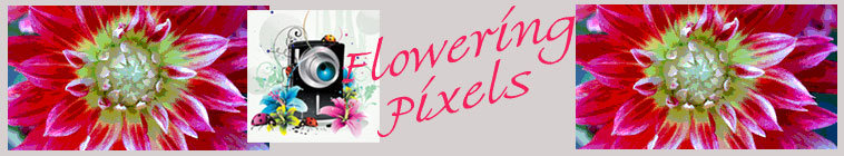 Flowering Pixels