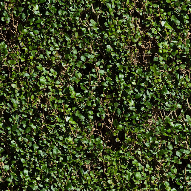 Seamless Green Hedge Texture
