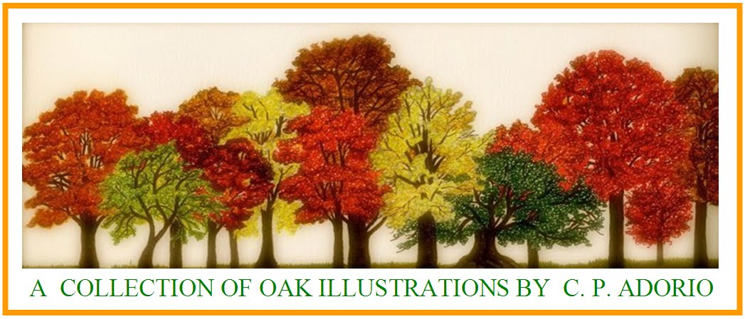 Cecilia Adorio's Illustrated Oak Collection
