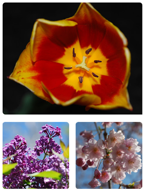 orange Lilly, Lilac and Cherry Blossoms