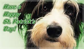 Picture of dog, Happy St Patrick's day
