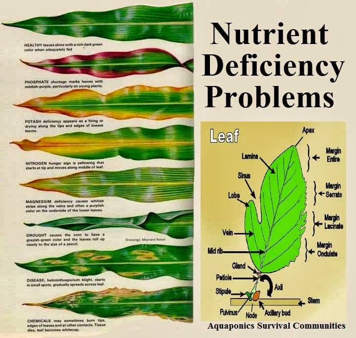 Garden and farms what does the leaf says about nutrient for Soil nutrients