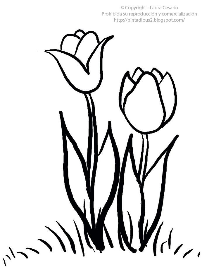 Dibujos para imprimir y colorear – Pinta Dibus: Dibujo de tulipanes ...