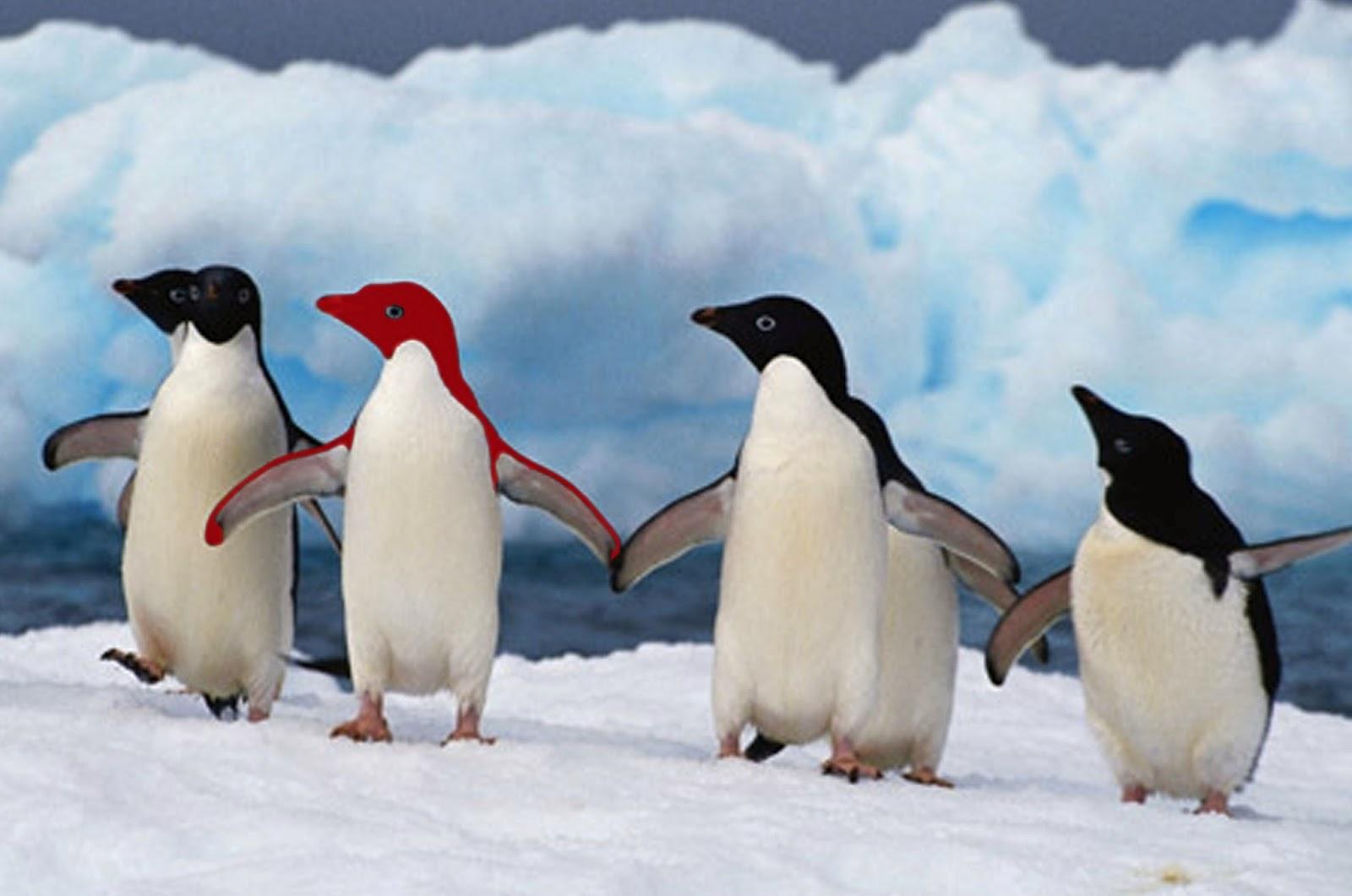 Cartoon penguins holding hands - photo#13