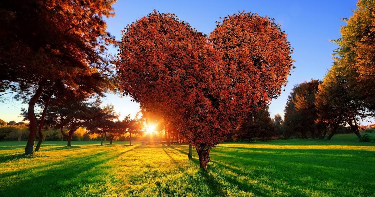 Fotos e imagenes gratis. Amor, romanticas, corazones