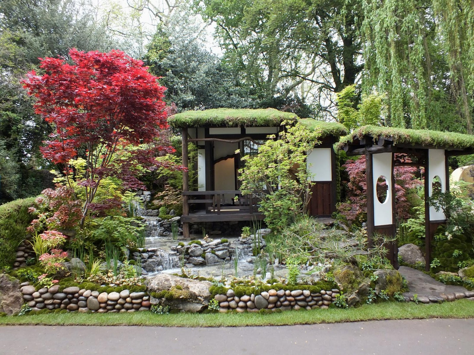 The diligent gardener chelsea 2013 stunning japanese for Flowers for japanese gardens