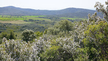 Primavera: ressorgiment de la natura