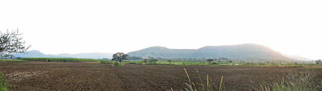 panoramic view of cultivated field