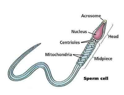 Sperma yang Sehat