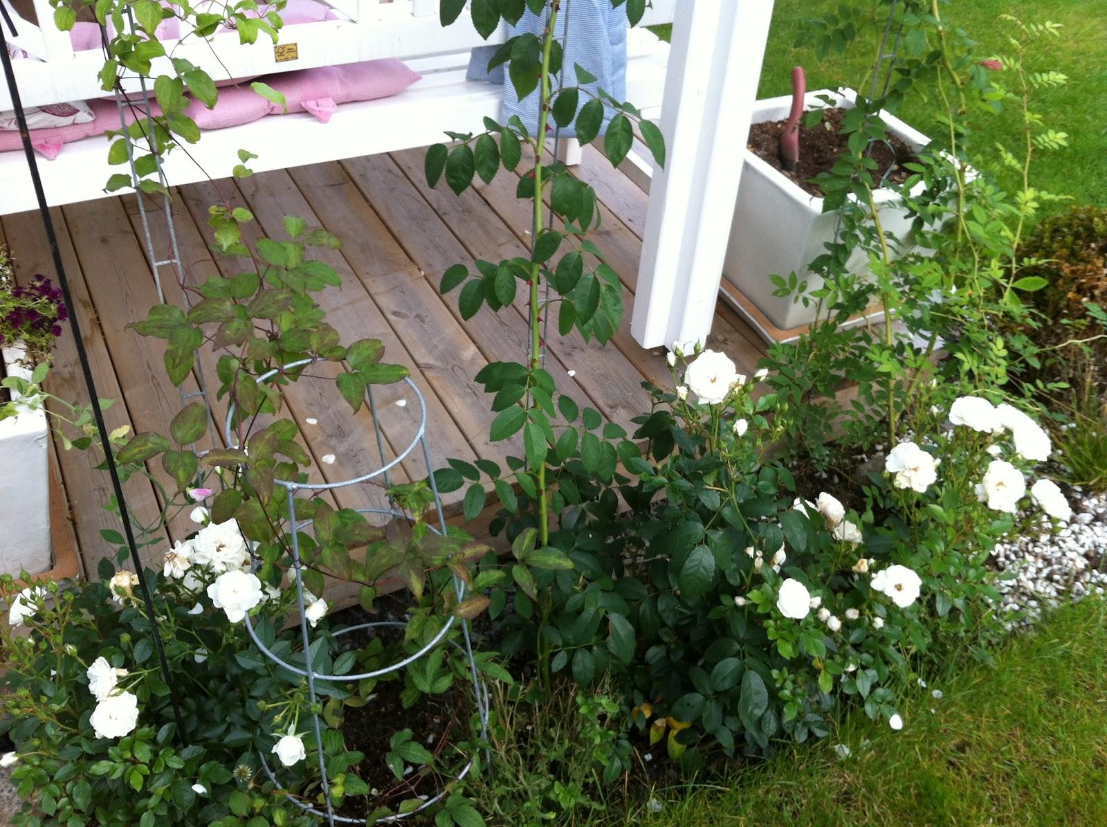 Njut i din trädgård: en rabatt har rotat sig!