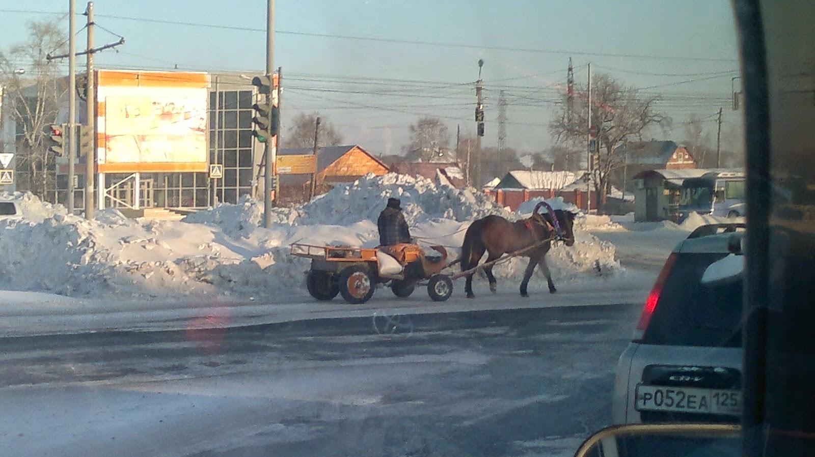 Лошадь стоящая на перекрестке