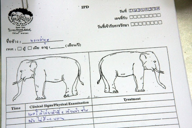 World&#39;s First Elephant Hospital in Thailand