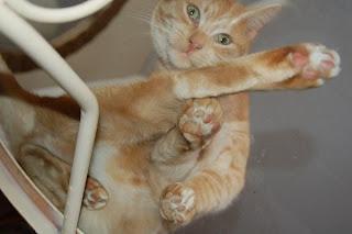 Kucing yang cantik