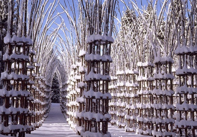 Cathedral made out of living trees-2