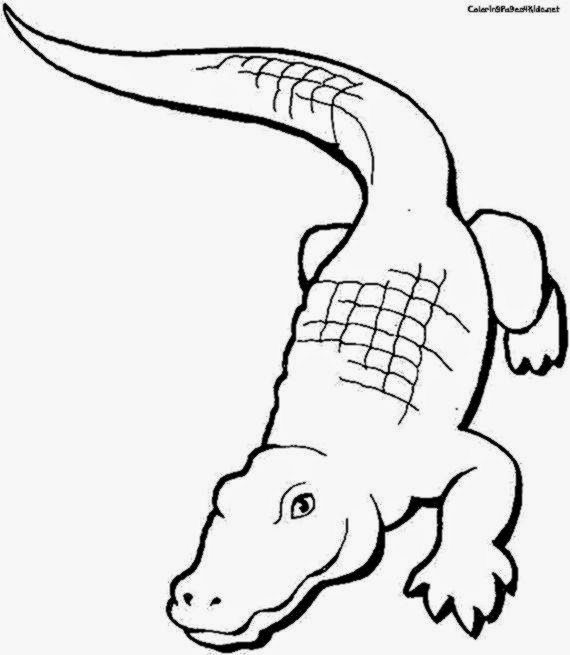 alligator coloring pages for preschool - photo#34