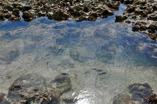 foto peixes em piscinas naturais
