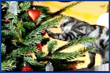 Silvester Neujahr: lustige MMS Bilder und Grußkarten E