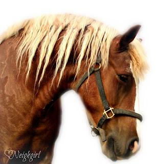 Wendell, the Wonder Horse
