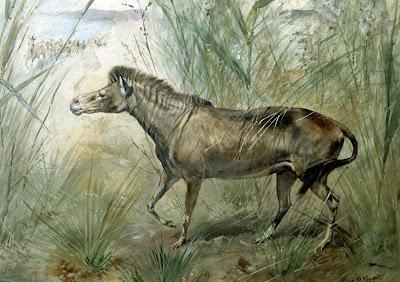 Equidae prehistoricos Orohippus