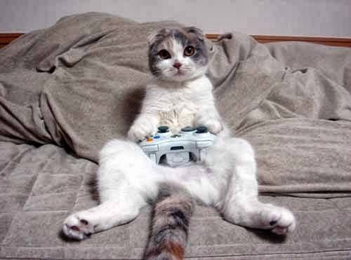 cat gamer