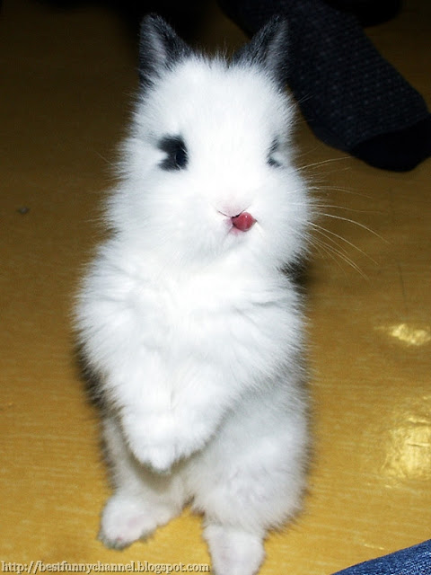 Cute and funny white bunny.