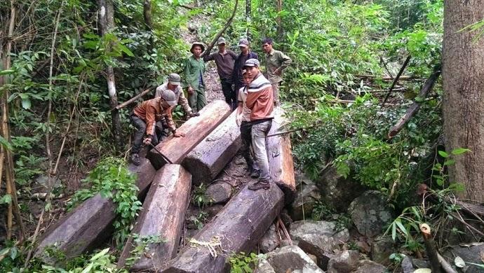 Gia Lai: Một lâm tặc bị gỗ đè tử vong khi chạy trốn kiểm lâm