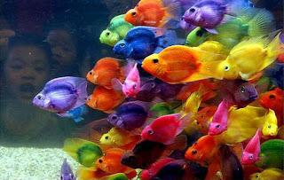 صورة رائعة لأسماك بألوان مختلفة