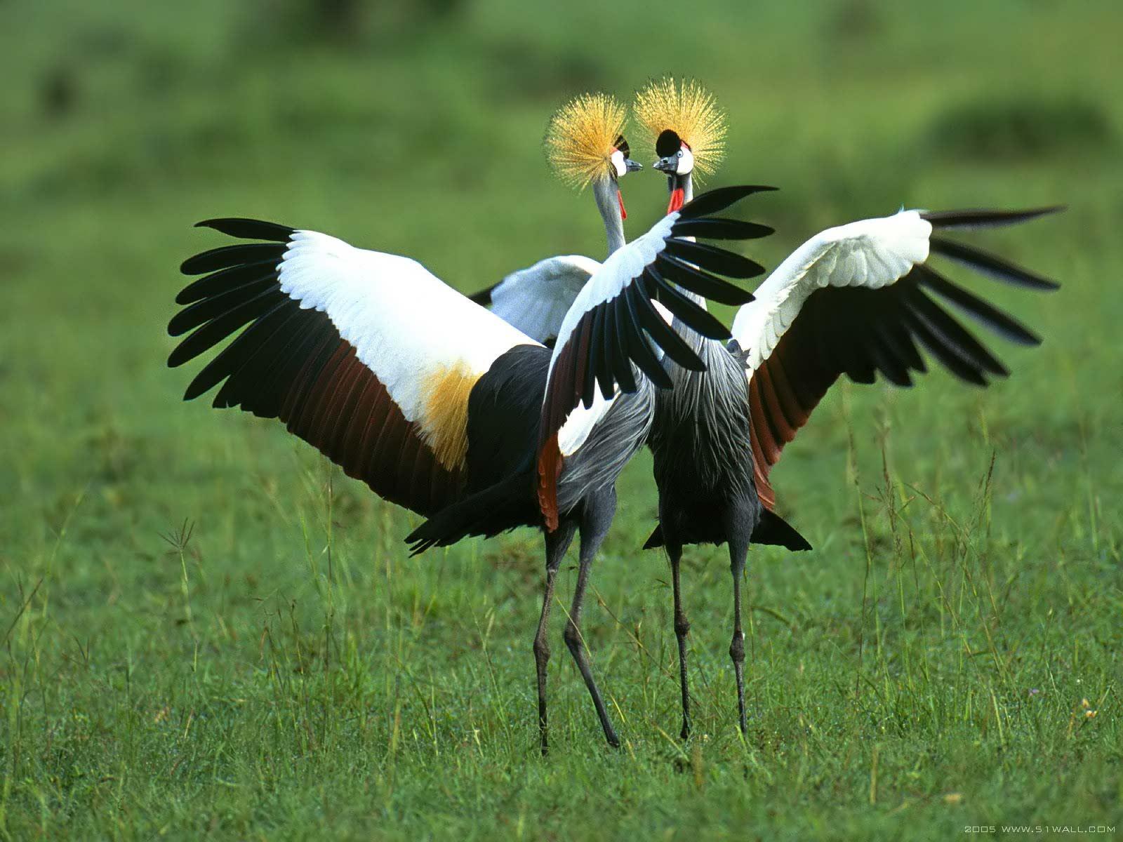 Beautiful Birds In The World