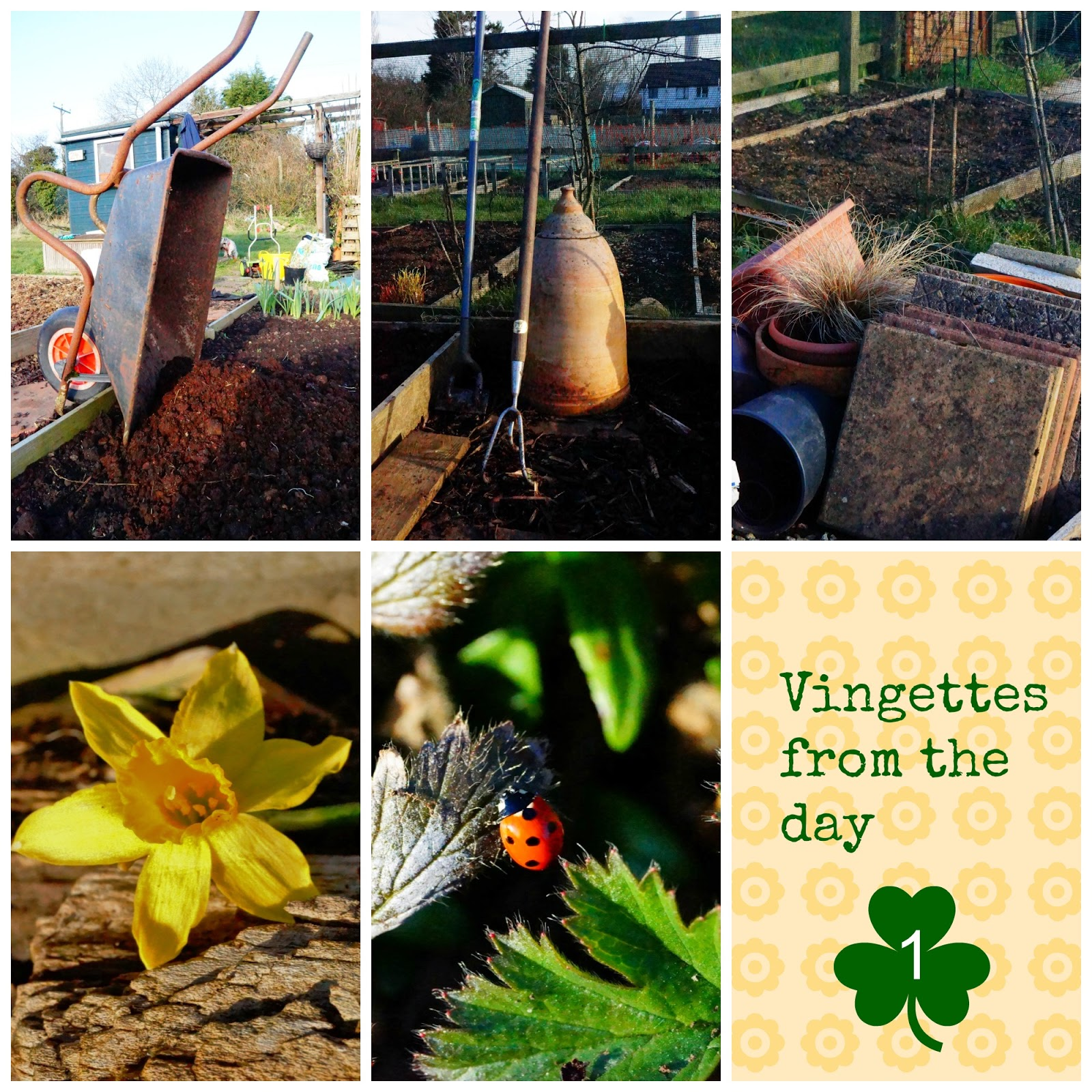 Vingettes from Day 1 - growourown.blogspot.com ~ alloment blog