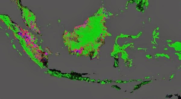 Peta Google Earth Menunjukkan Hutan Indonesia Makin Prihatin
