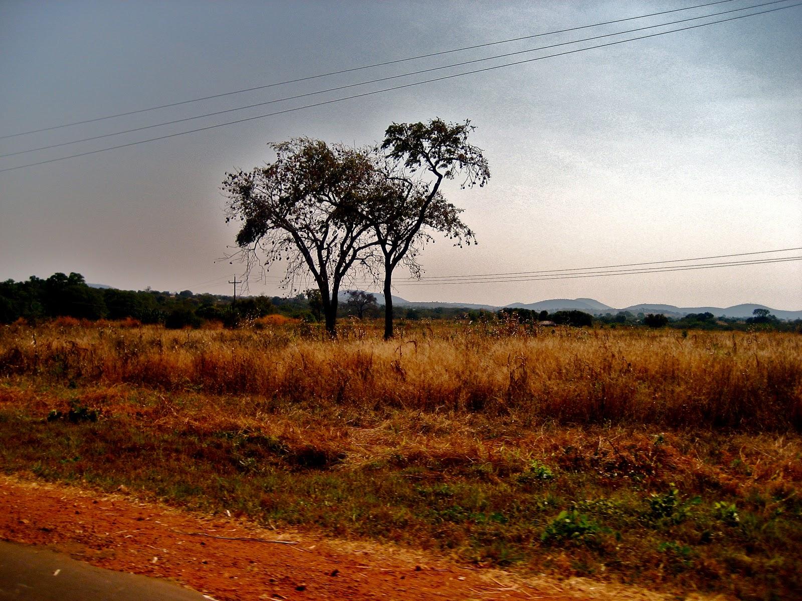 essay deforestation its impact environment
