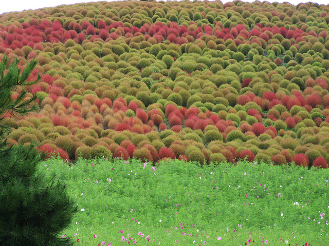 Hitachi Seaside Park