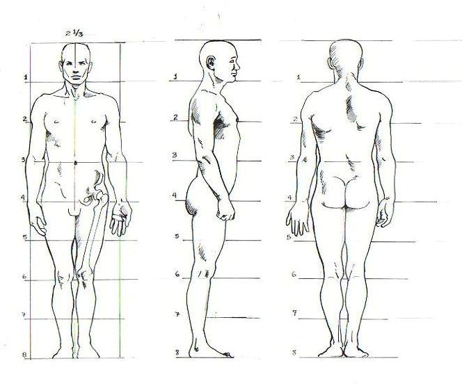 Dibujar es entender la importancia del dibujo for Medidas antropometricas del cuerpo humano