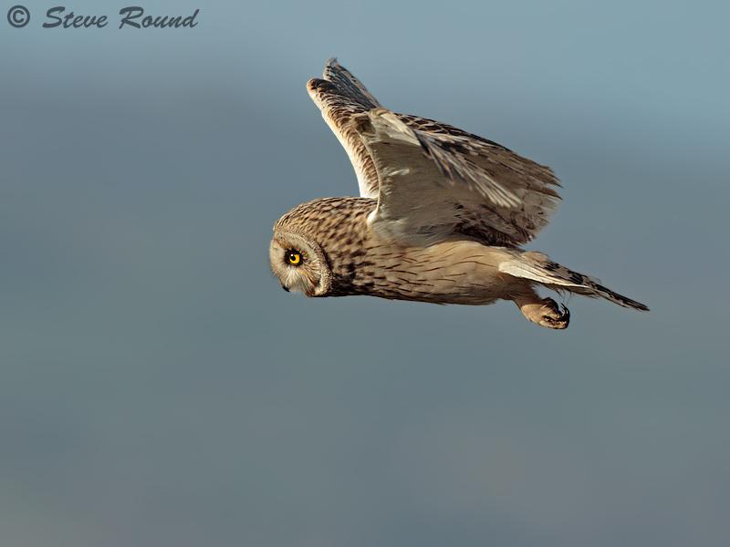 bird, nature, wildlife
