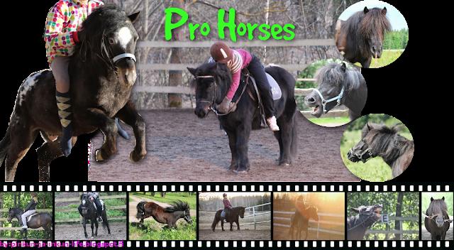 Pro Horses