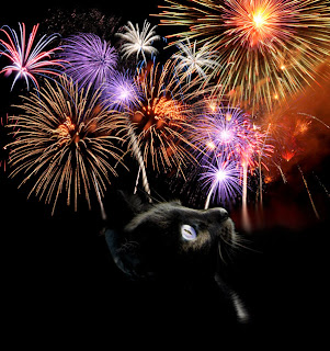 Black cat looking up at fireworks