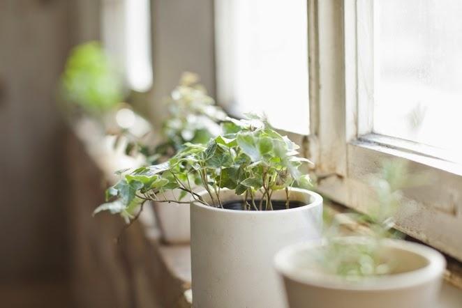 5 Health Benefits of Houseplants