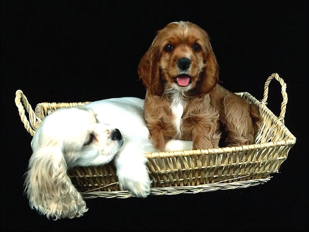 http://4.bp.blogspot.com/--MKFmkk4zx4/TdVzcTi48QI/AAAAAAAABD8/7K1uXPpKo_g/s1600/sfondo+cani+teneri+cuccioli.jpg