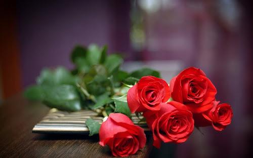 Gambar Bunga Mawar Terbaik