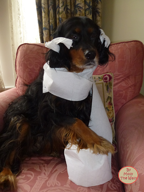 Molly The Wally Has Toilet Paper!