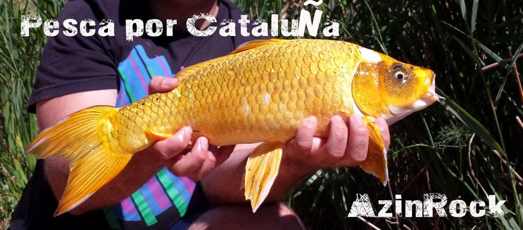 Pesca por Cataluña: Rockfishing - Mosca - Spinning - Eging