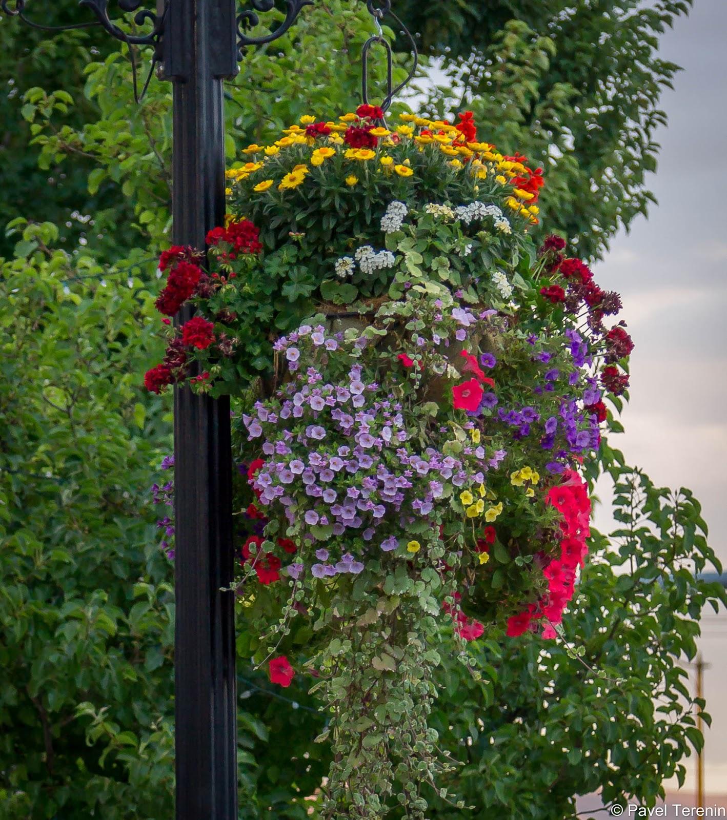 Обилие цветов в городе очень контрастирует с пустынными пейзажами за городом.