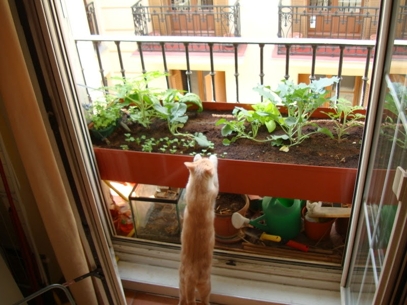 Mi huerto urbano en un balc n cerca de cibeles primavera - Huerto urbano balcon ...