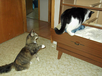 Molly and Emerald go into the dresser cabinet