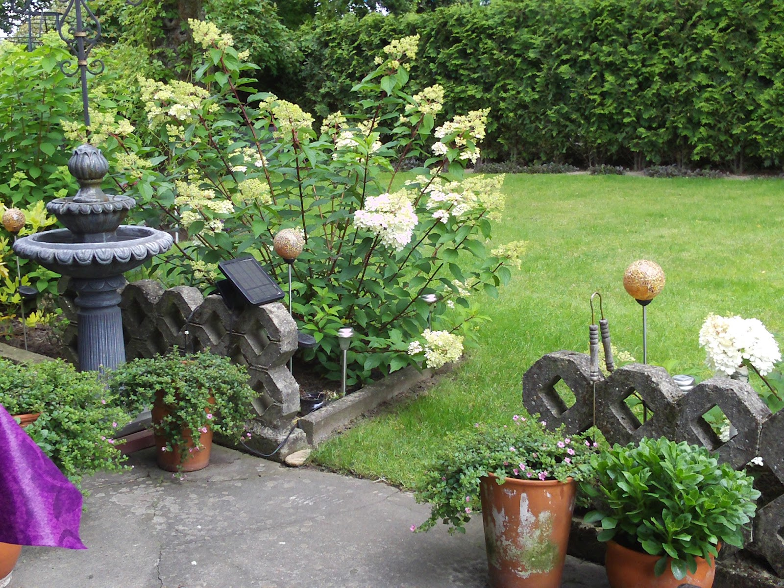 hydrangea paniculata vanille fraise gartenelfe. Black Bedroom Furniture Sets. Home Design Ideas