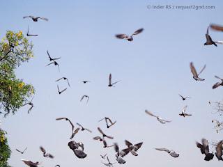 Pigeon flying in blue sky